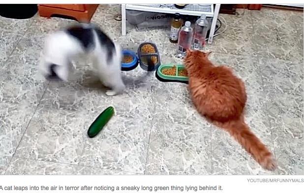 不要后背对着猫科动物视频